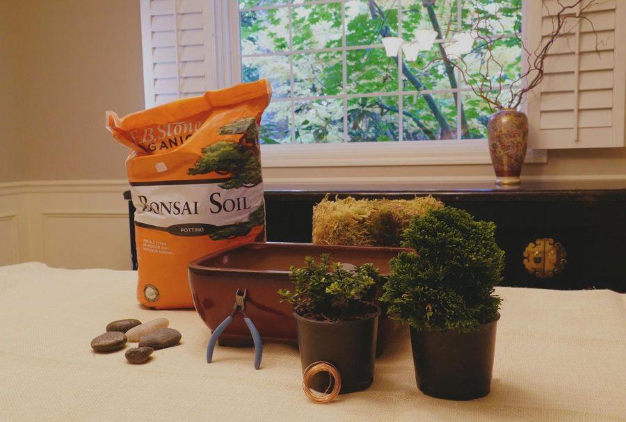 Bonsai+Materials