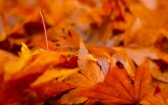 Photography Gallery: Fall Images