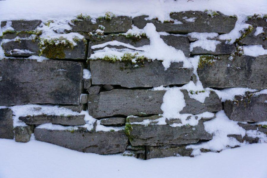 Falkner+SNOW+5