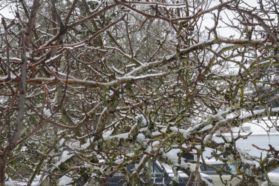 Merced Snow 3_